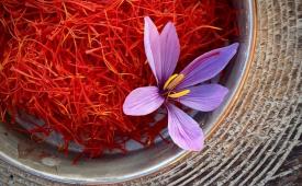 جولان دلالان در بازار زعفران