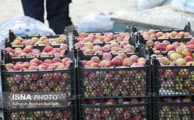 صادرات مانع بزرگ کاهش قیمت میوه/ خرید مستقیم محصولات کشاورزی توسط عراقیها