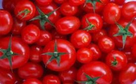 با صادرات گوجه به عراق، پای گوجه چینی به بازار ایران باز شد